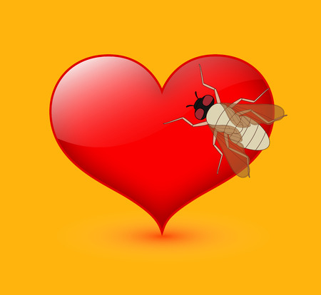 housefly: Bee on Heart