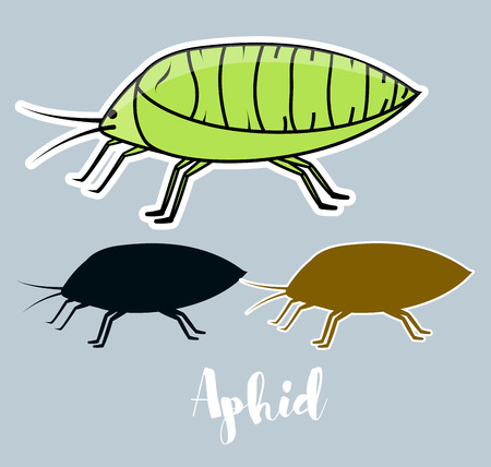 lice: Plant Lice Insects Vector Illustration