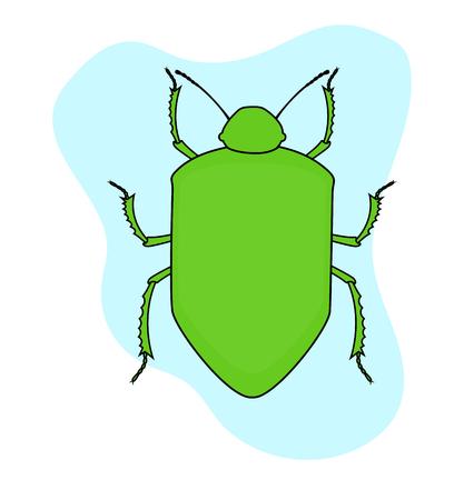 maggot: Green Beetle Insect Vector