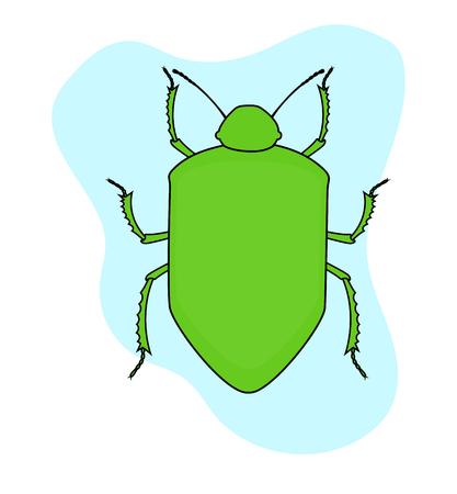 Green Beetle Insect Vector