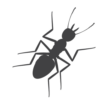 piojos: Silueta de la hormiga