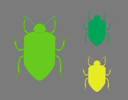 arthropoda: Beetle Insects Shapes