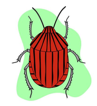 crawly: Red Striped Beetle Insect