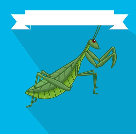 entomology: Creepy Mantid Insect