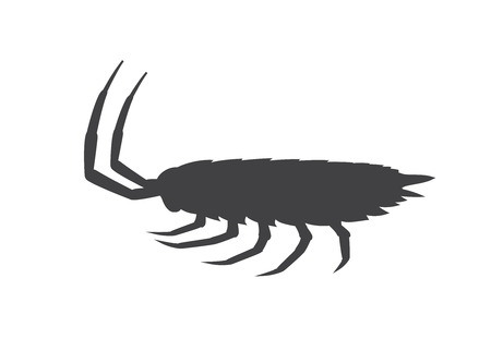 grub: Woodlouse Insect Silhouette