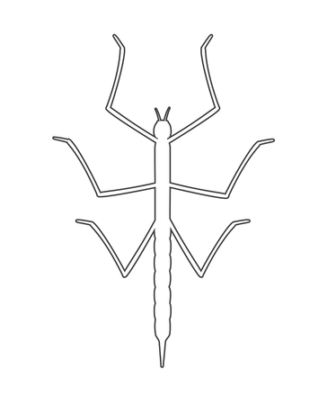 stick insect: Drawing Art of Stick Insect