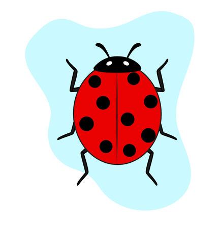 ladybug: Ladybug Insect Illustration