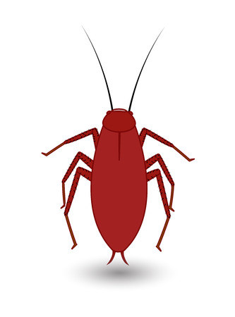 crawly: Cockroach Insect Vector