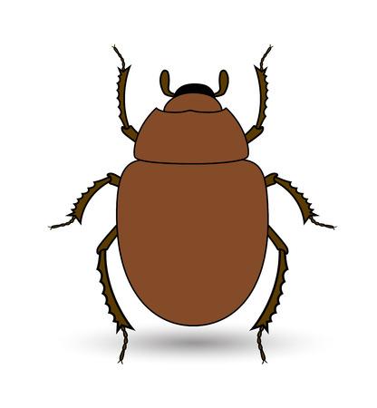 piojos: Escarabajo del escarabajo del insecto vector Vectores