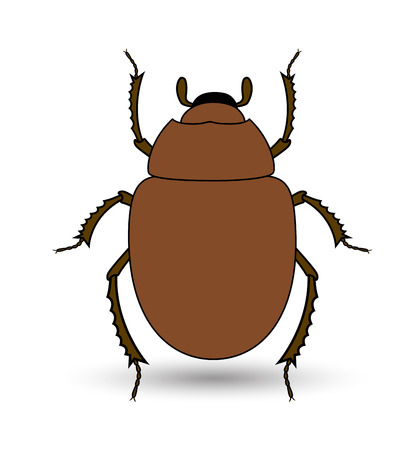 parasite: Scarab Beetle Insect Vector Illustration