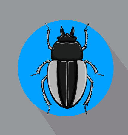 Creepy Scarab Beetle Insect