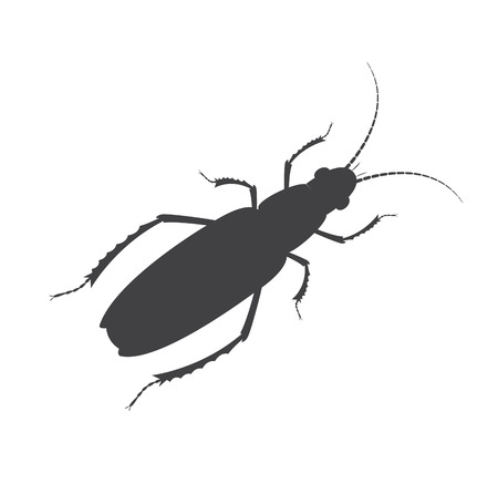 grub: Totengraber Insect Vector Silhouette