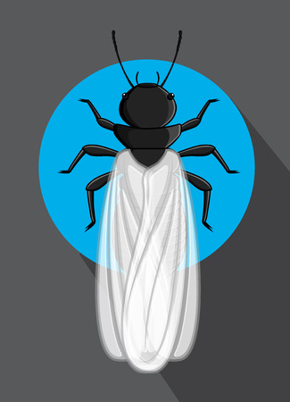 termite: Winged Termite Vector Insect