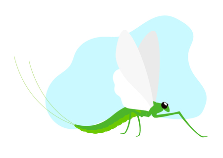 crawly: Mayfly Insect