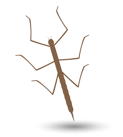 stick insect: Stick Insect Vector Illustration