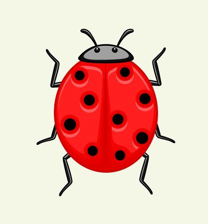 crawly: Ladybug Vector