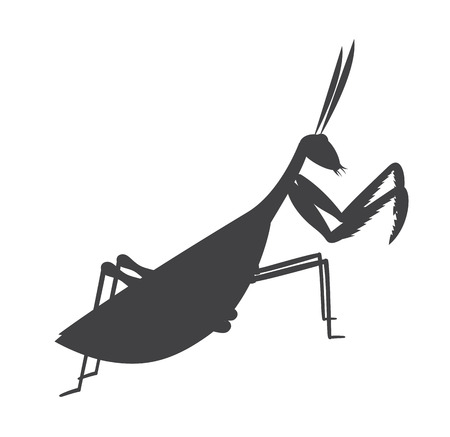 Mantid Insect Silhouette Illustration
