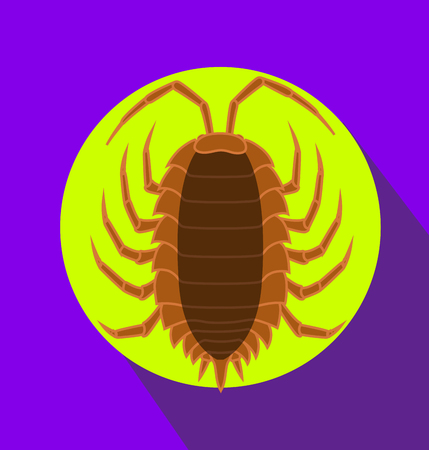 crawly: Lice Insect Vector Illustration