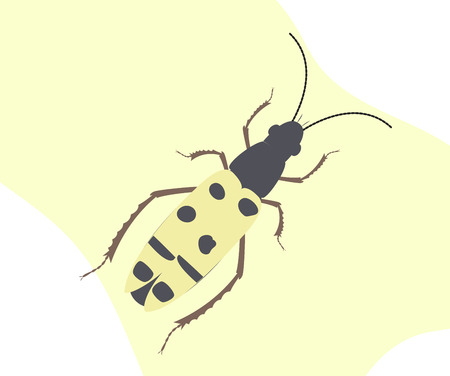 Spotted Totengraber Insect Illustration