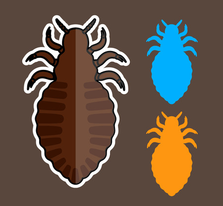 lice: Lice Insects