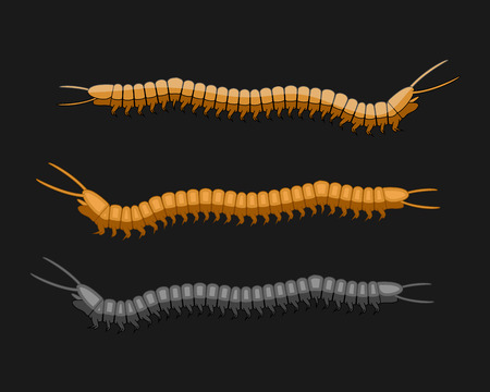 Millipede Worms Vector