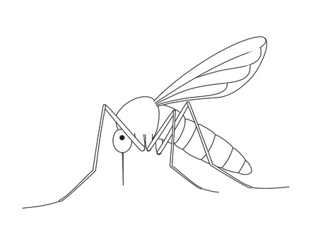 hum: Mosquito Drawing