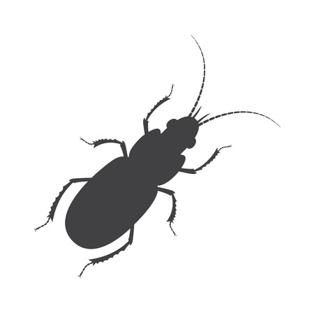 grub: Totengraber Insect Silhouette