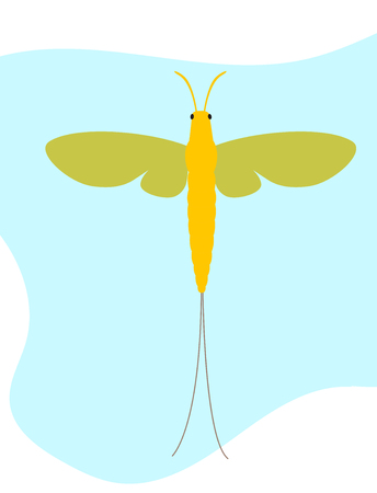 grub: Mayfly Insect Vector