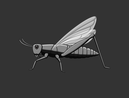 chorthippus: Vintage Grasshopper Vector Illustration