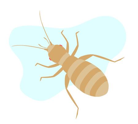 piojos: piojo de insectos Vectores