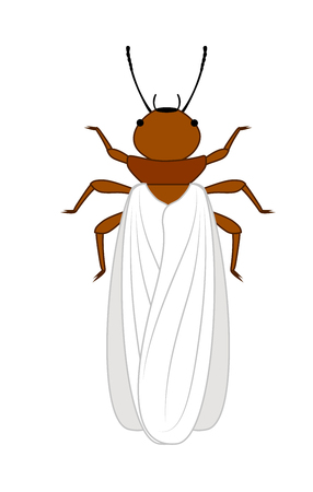 termite: Winged Termite Insect