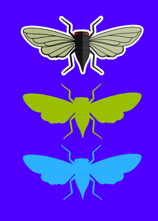 cigarra: Los insectos cigarra