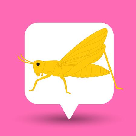 chorthippus: Grasshopper Insect Vector