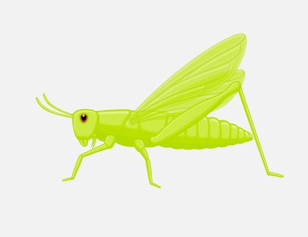 Bushcricket Insect Vector Illustration