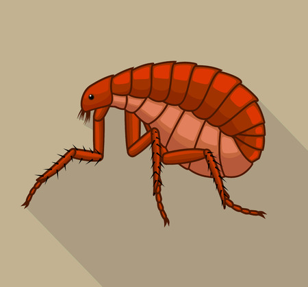 Floh Insect Vector Illustration