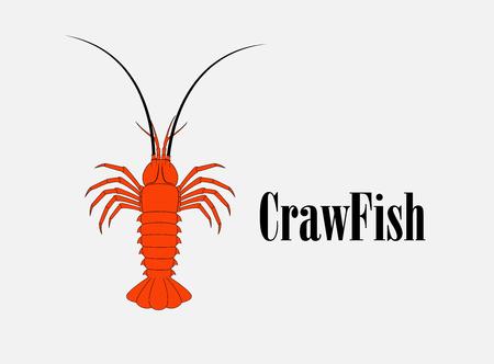 Crawfish Vector Illustration Illustration