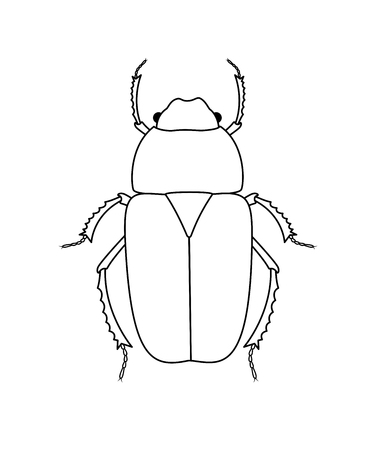 Drawing Art of Beetle Insect