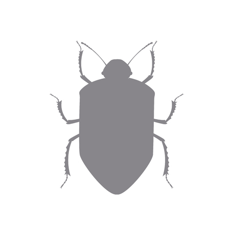 termite: Beetle Insect Vector Shape