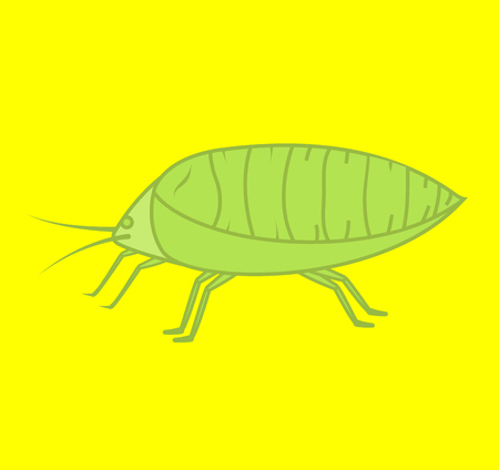lice: Plant Lice Insect Vector