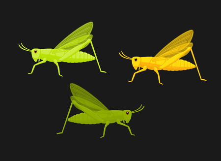 Grasshoppers Illustration