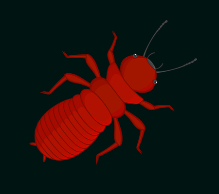 termite: Creepy Termite Insect Illustration