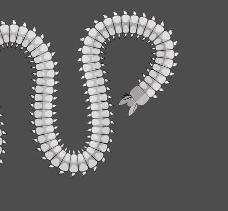 wriggle: Centipede Worm Vector