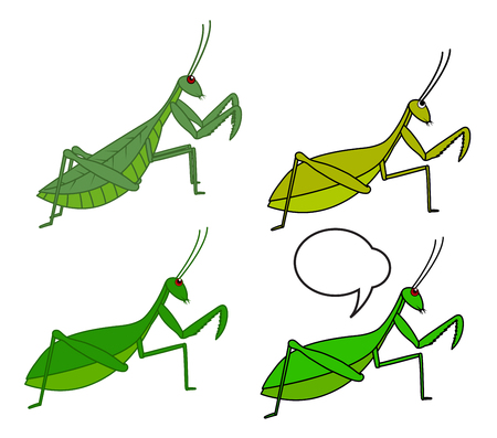 mantid: Mantid Insects Illustration