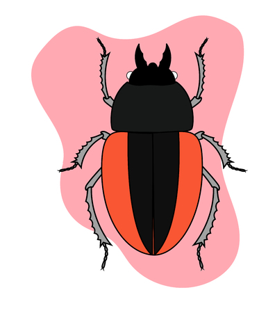 scarab: Scarab Beetle Illustration