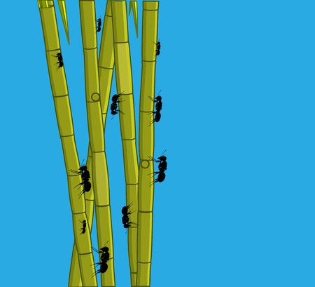sugarcane: Ants Isolated on Sugarcane Sticks