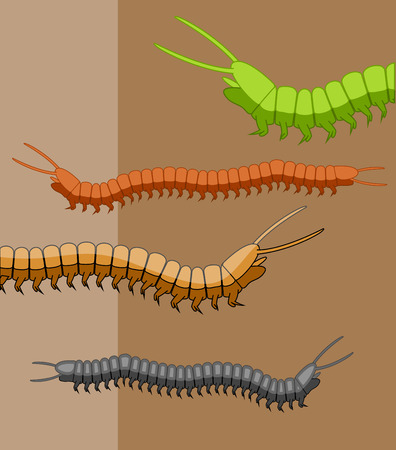 book worm: Millipede Worms