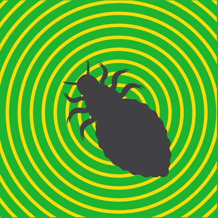 piojos: Forma piojos de insectos Vectores