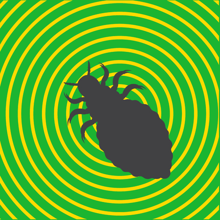 Lice Insect Shape