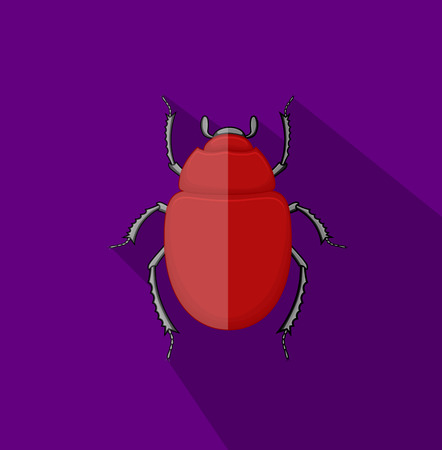 pesticides: Wild Scarab Beetle Insect