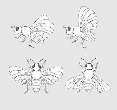 crawling creature: Bees and Flies Drawings